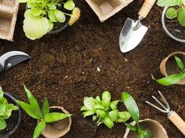 Plantenkennis  |  Woensdag van 9u00 tot 16u00  (5 woensdagen : van 05/02 tot 11/03/2020) | Locatie Maasmechelen