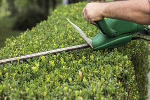Snoeien van hagen     Maandag van 9u00 tot 16u00  (5 dagen : van 27/04 tot 25/05/2020)   Locatie Maasmechelen