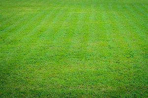 Aanleg van grasvelden | Woensdagavond van 18u30 tot 22u10 (van 04/09 tot 13/11)