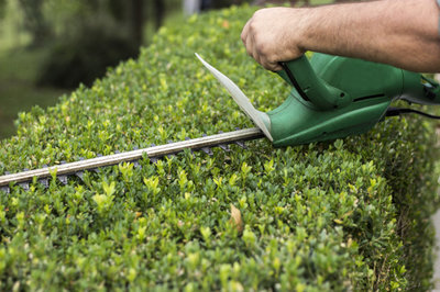 Snoeien van hagen  |  Maandag van 9u00 tot 16u00  (5 dagen : van 27/04 tot 25/05/2020) | Locatie Maasmechelen