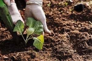 Aanplantingen PIBO | Woensdag van 9u00 tot 16u00  (5 dagen van 14/10 tot 25/11/2020) | Locatie Tongeren