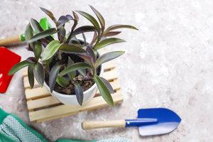 Plantenkennis | Maandag van 9u00 tot 16u00 (5 dagen van 01/03/2021 tot 29/03/2021) | Locatie Maasmechelen