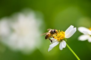 Ecologische tuin | Maandag van 18u30 tot 22u10 (van 01/02/2021 tot 21/06/2021) | Locatie Maasmechelen