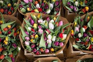 Florist Jaar 3 : gesuperviseerde beroepspraktijk | Donderdagnamiddag 13u30 tot 17u10 ( van 02/09/2021 tot 20/01/2022) | Locatie Maasmechelen